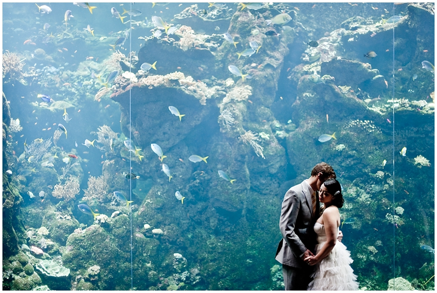 Sf aquarium wedding
